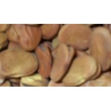 Dry Broad Fava 1 Lb